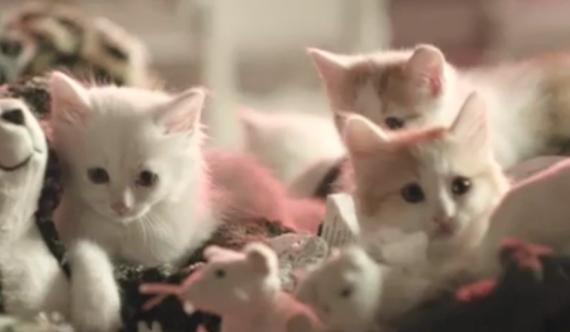 IKEAcats – Ein IKEA voller Katzen
