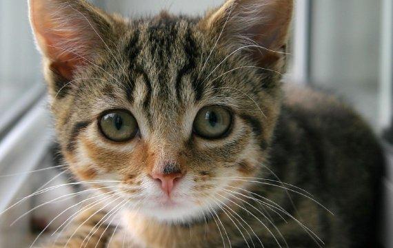 Placekitten – Mach aus deiner Website eine Katze