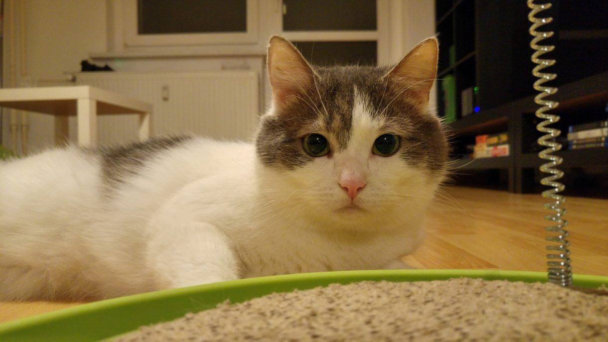 Bild von einer Katze
